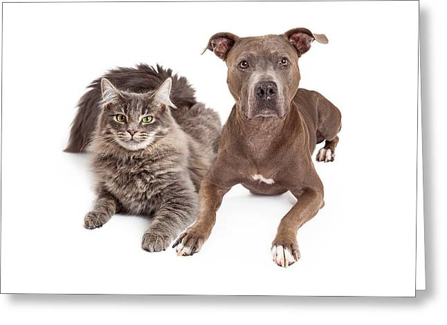 Grey Cat And Dog Laying Together Greeting Card by Susan Schmitz