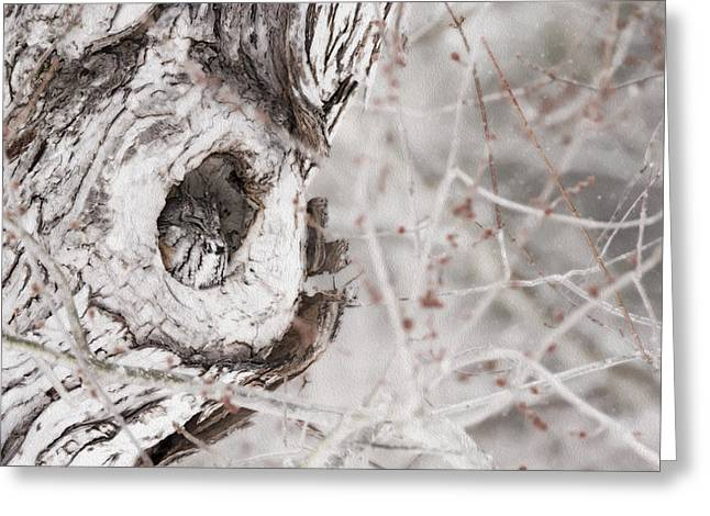 Morph Greeting Cards - Grey Morph Eastern Screech Owl as an Oil Painting Greeting Card by Tracy Winter