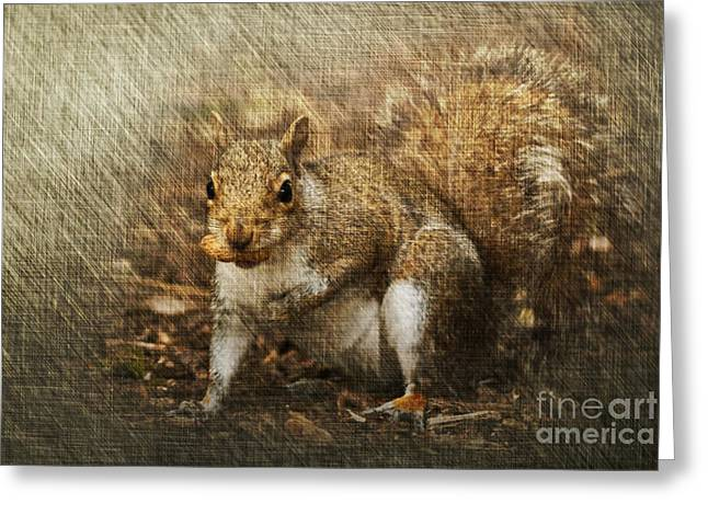 Sciurus Carolinensis Greeting Cards - Grey Squirrel Greeting Card by Steve Purnell
