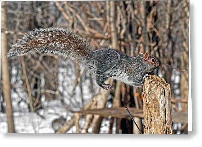 Flying Animal Greeting Cards - Grey Squirrels long tail Greeting Card by Asbed Iskedjian