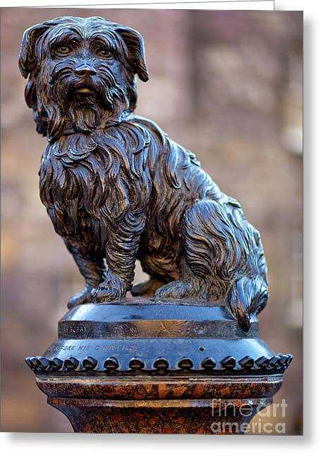 Greyfriars Bobby Greeting Card by Andre Goncalves