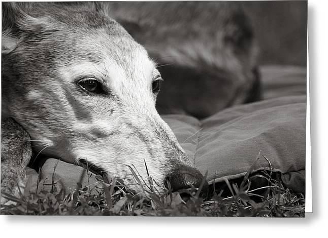 Rescued Greyhound Greeting Cards - Greyful Greeting Card by Angela Rath