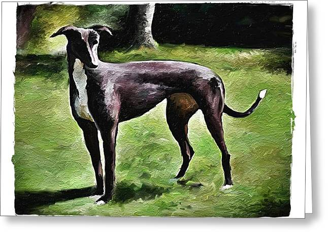 Greyt Greeting Cards - Greyhound Oneco Marie Greeting Card by Terry Mulligan