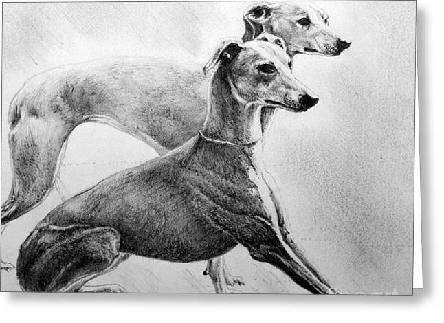 Pencil Drawings Of Pets Greeting Cards - Greyhounds Greeting Card by Roy Kaelin