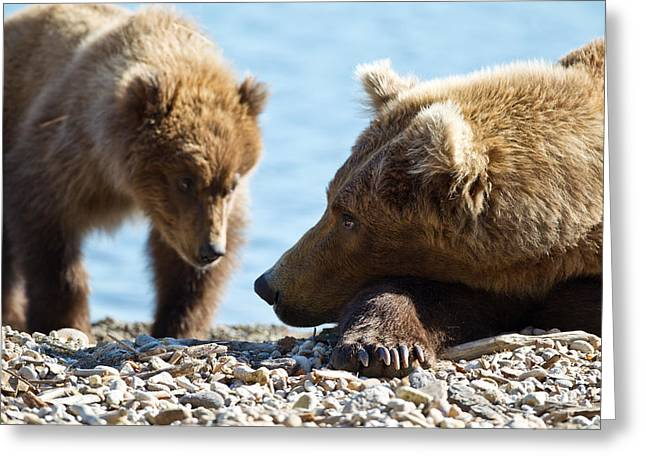 Caring Mother Greeting Cards - Grizzly and Cub Greeting Card by Brandon Broderick