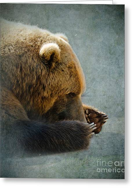 Betty Larue Greeting Cards - Grizzly Bear Lying Down Greeting Card by Betty LaRue