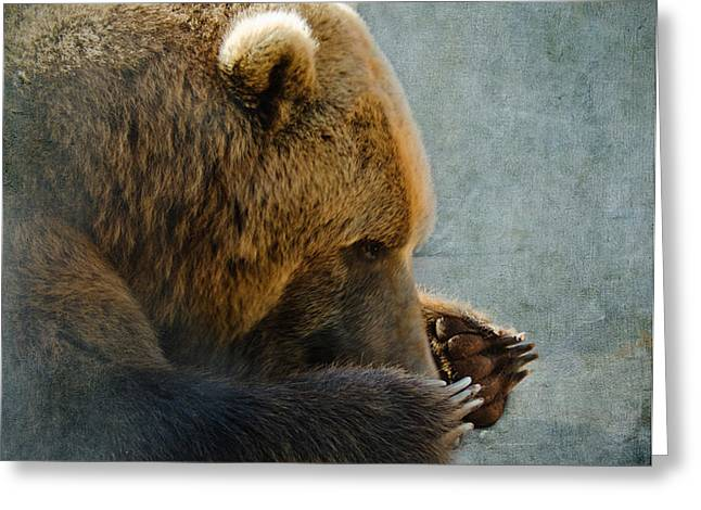 Grizzly Bear Lying Down Greeting Card by Betty LaRue