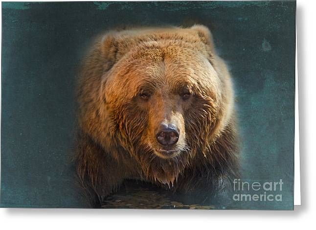 Digitally Altered Greeting Cards - Grizzly Bear Portrait Greeting Card by Betty LaRue