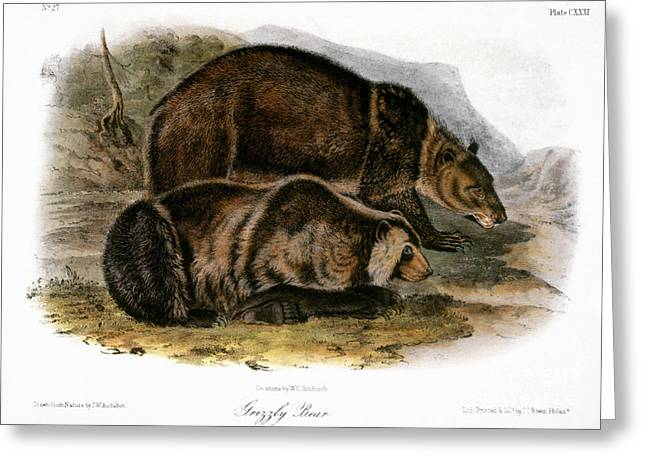 1846 Greeting Cards - Grizzly Bear (ursus Ferox) Greeting Card by Granger