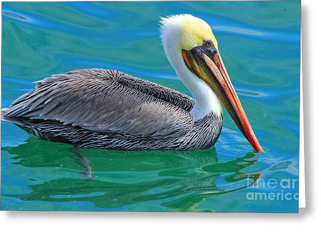 Seabirds Greeting Cards - Groomed and Ready Greeting Card by Kris Hiemstra