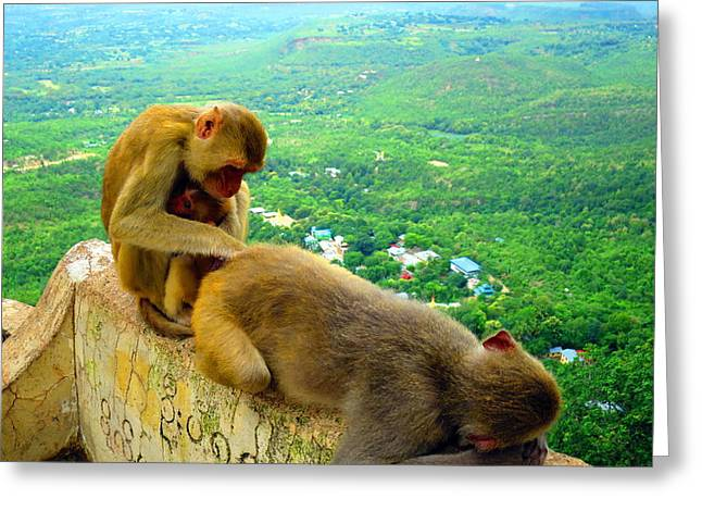 Mount Popa Greeting Cards - Grooming Time Greeting Card by Scott Brindle