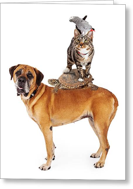 Mastiff Pup Greeting Cards - Grop of Pets Stacked Up Greeting Card by Susan  Schmitz