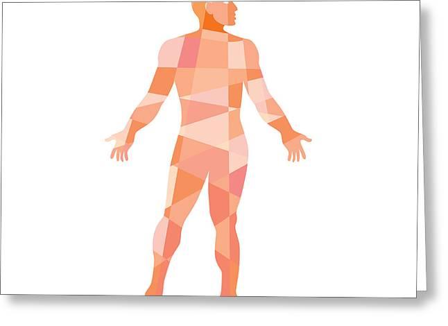 Geometric Artwork Greeting Cards - Gross Anatomy Male Isolated Low Polygon Greeting Card by Aloysius Patrimonio