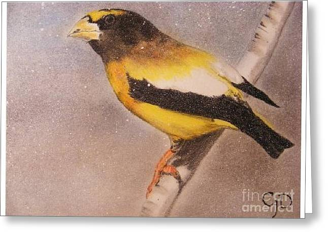 Fairy Pastels Greeting Cards - Grossbeak Greeting Card by Crispin  Delgado