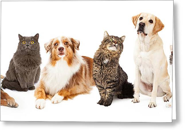 Sheepdog Greeting Cards - Group of Cats and Dogs Greeting Card by Susan  Schmitz