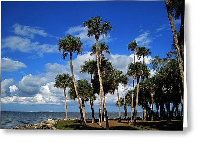 Group Of Palms Greeting Card by Susanne Van Hulst
