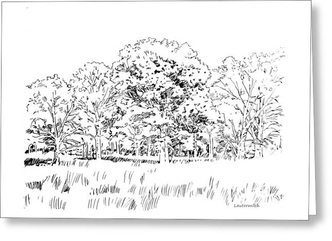 Reserve Drawings Greeting Cards - Grove of Oak Trees Greeting Card by John Lautermilch