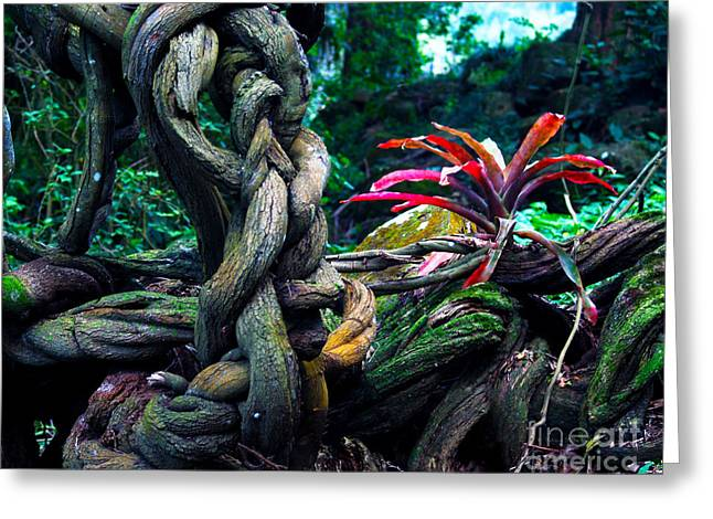 Bromeliad Greeting Cards - Grow Where Youre Planted II Greeting Card by Patricia Griffin Brett