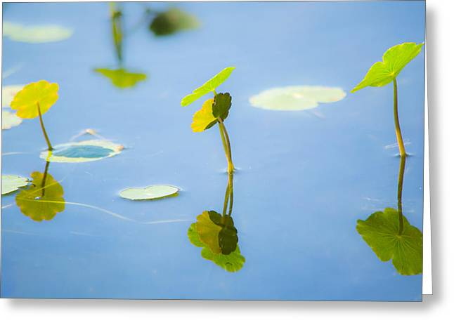 Florida Pond Greeting Cards - Growing Together Greeting Card by Parker Cunningham