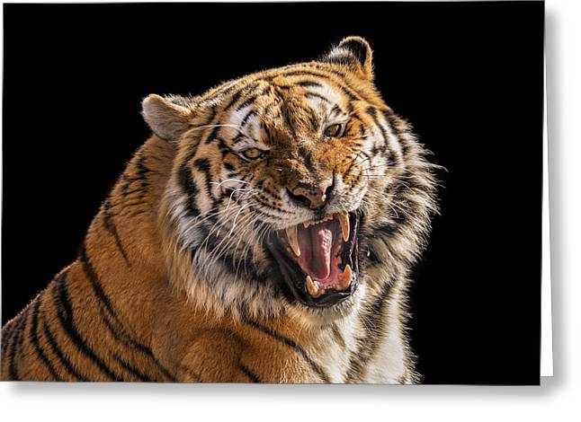 Growling Tiger Greeting Card by Pat Eisenberger