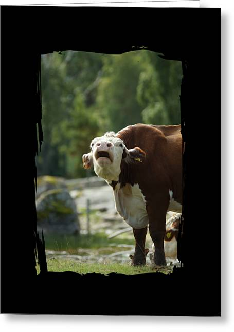 Growling Greeting Cards - Grumpy Cow Talk Greeting Card by The one eyed Raven