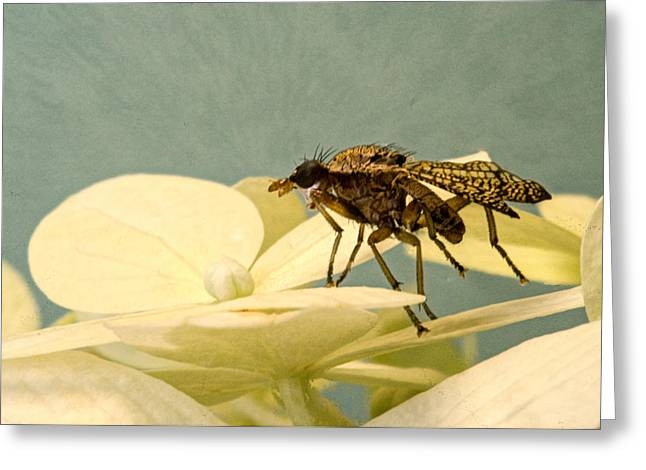 Tennessee Greeting Cards - Grumpy Old Man Fly Greeting Card by Douglas Barnett