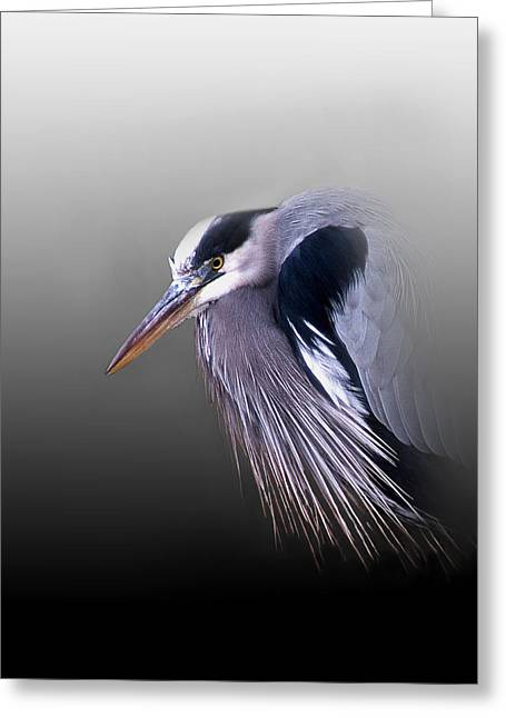 Nature Pictures Greeting Cards - Grumpy Ole Man Greeting Card by Skip Willits