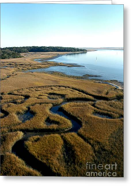 Florida Marsh Greeting Cards - Guana River Greeting Card by Addison Fitzgerald