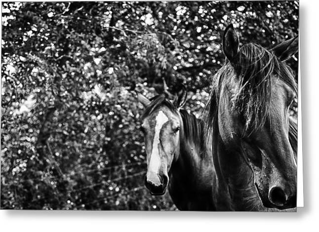 Horse Images Greeting Cards - Guardian of his mate Greeting Card by Toni Hopper