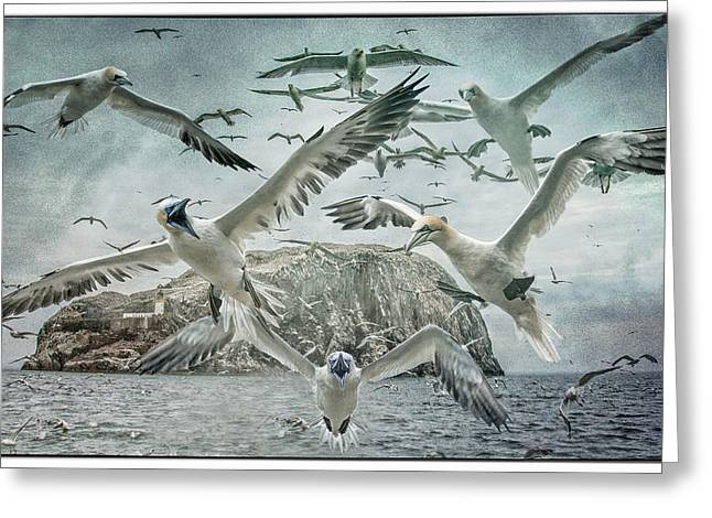 Flying Seagull Greeting Cards - Guardians of The Rock Greeting Card by Brian Tarr