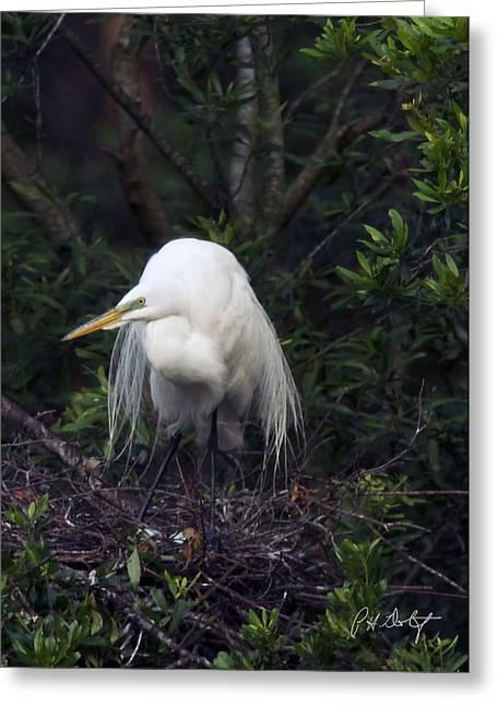 Lowcountry Greeting Cards - Guarding the Eggs Greeting Card by Phill  Doherty
