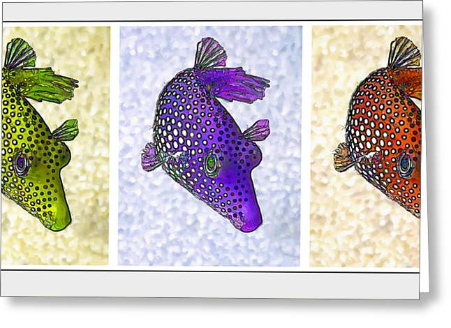 Sea Of Cortez Greeting Cards - Guinea Fowl Puffer Fish Triptych Greeting Card by Bill Caldwell -        ABeautifulSky Photography