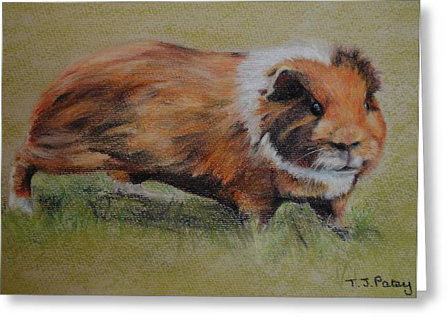 Pigs Pastels Greeting Cards - Guinea Pig Greeting Card by Tanya Patey