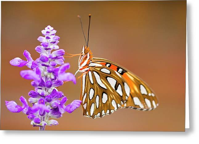 Hershey Greeting Cards - Gulf Fritillary Greeting Card by Shelley Neff