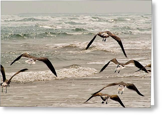Gulf Gulls Greeting Card by Michael Flood