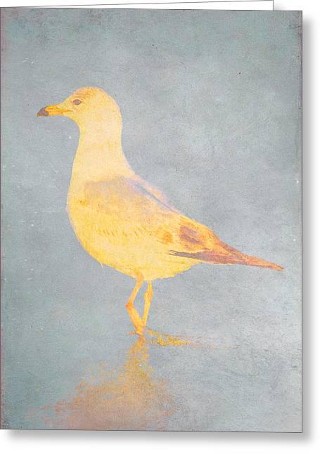 Nature Study Digital Art Greeting Cards - Gull 002 t001 Greeting Card by Tom Bradley