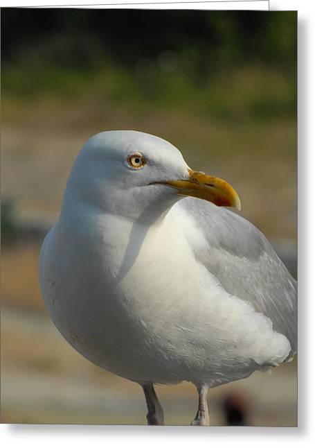 Beach At Night Greeting Cards - Gull 109 Greeting Card by Joyce StJames