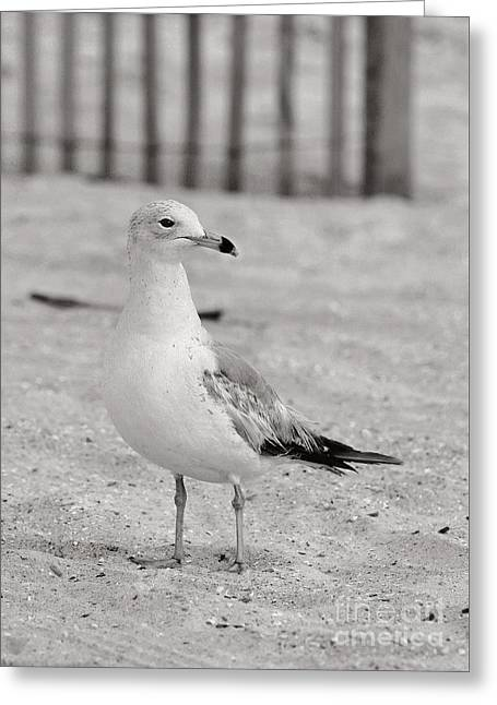 Land Sea And Sky Series Gull Greeting Card by Angela Rath