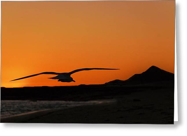 Gull At Sunset Greeting Card by Dave Dilli