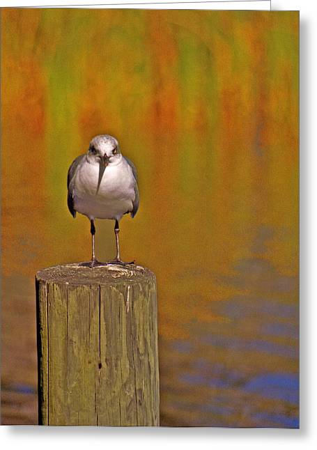 Bier Greeting Cards - Gull on Post Greeting Card by Michael Peychich