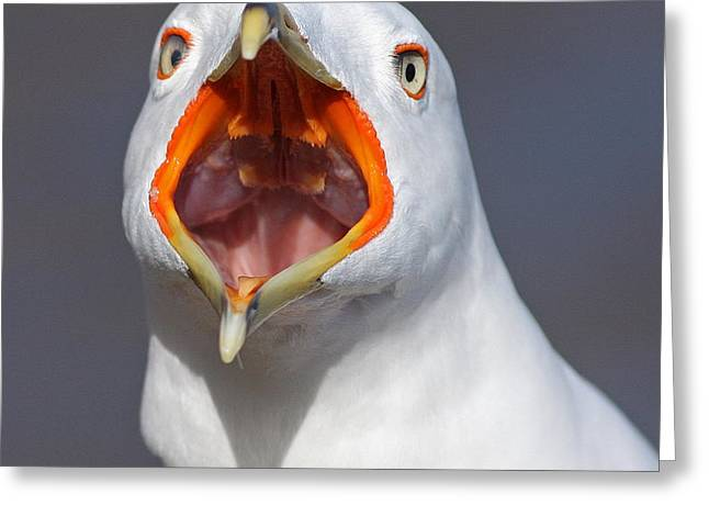 Gull Portrait Greeting Card by Mircea Costina Photography