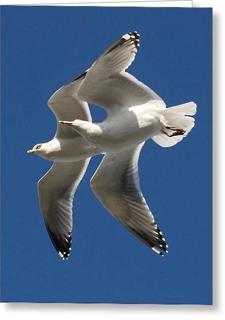 Beach At Night Greeting Cards - Gulls 121 Greeting Card by Joyce StJames