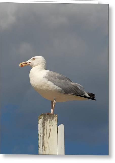 Beach At Night Greeting Cards - Gulls 128 Greeting Card by Joyce StJames