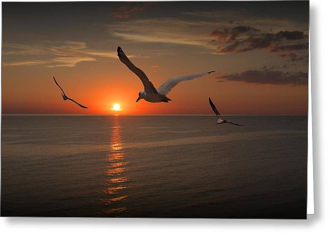 Gulls Flying Towards The Sun Greeting Card by Randall Nyhof
