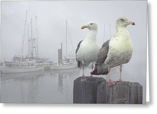 Gulls In A Misty Harbor Greeting Card by Randall Nyhof