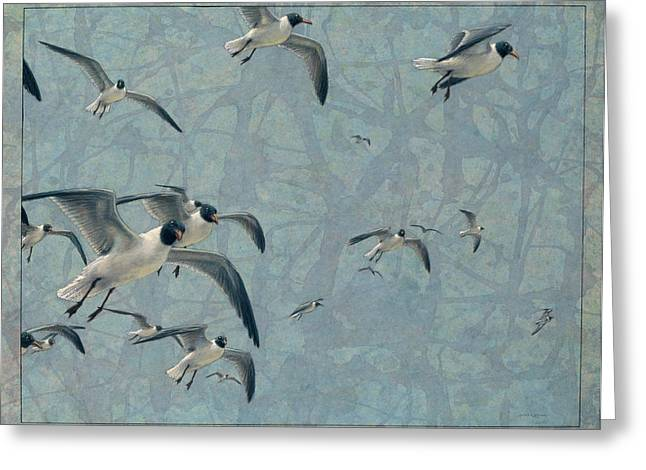 Flying Drawings Greeting Cards - Gulls Greeting Card by James W Johnson