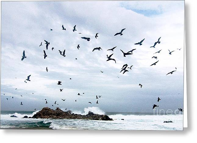 Coastal California Greeting Cards - Gulls of Carmel Greeting Card by Norman  Andrus
