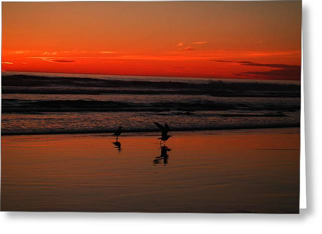 Sea Birds Greeting Cards - Gulls on the beach at sundown Greeting Card by Jeff  Swan