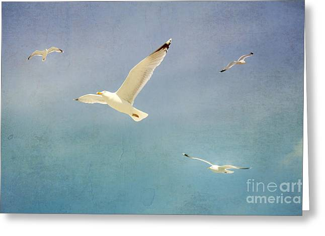 Gulls Greeting Card by SK Pfphotography