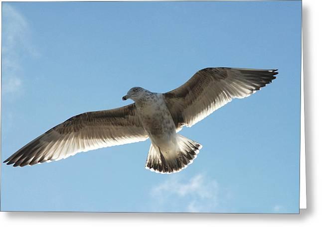 Beach At Night Greeting Cards - Gulls79 Greeting Card by Joyce StJames